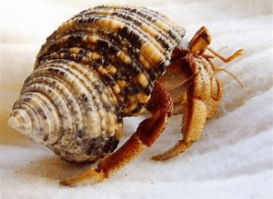Beware The Pet Land Hermit Crabs Scam - Pets Care Ideas