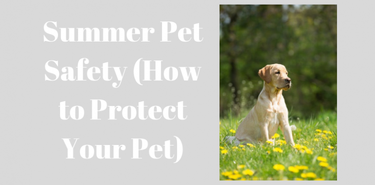 Summer Pet Safety (How to Protect Your Pet) - Pets Care Ideas